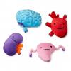 Plush Organs, custom plush toys manufacturers, plush toy prototype